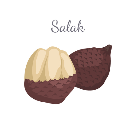 Salak Salacca zalacca palm tree exotic juicy fruit vector whole and cut isolated. Tropical edible food, dieting vegetarian tropical nutritious dessert Illustration