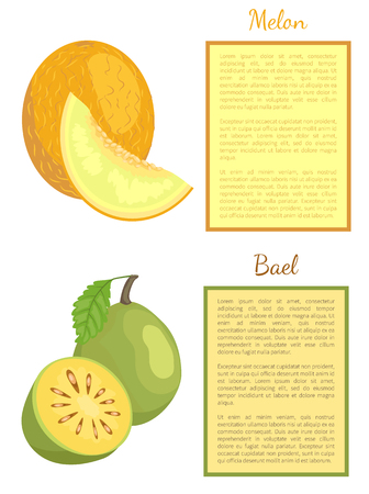 Bael exotic juicy fruit whole and cut vector poster frame for text. Melon ripe yellow berry. Aegle marmelos, Bengal quince. Tropical edible food