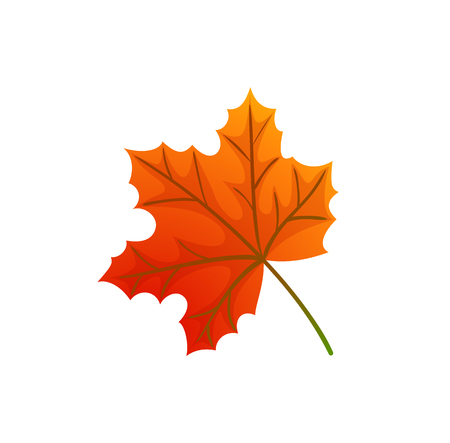 Maple Leaves and Autumnal Symbol Isolated Icon Vector