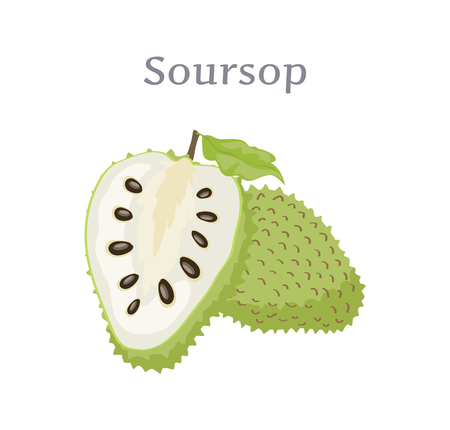 Soursop whole and cut fruit vector isolated on white. Annona montana edible medicinal plant in Annonaceae family, ripe berry with black seeds and leaf
