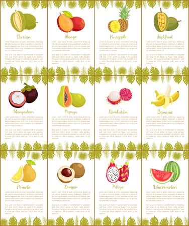 Durian and Mango Mangosteen Posters Set Vector