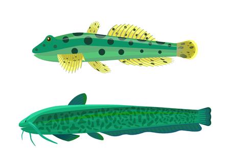 Wels Catfish Green Fish Set Vector Illustration