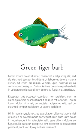 Green tiger barb isolated on white. Freshwater aquarium fish silhouette hand drawn graphic icon on blank background cartoon style vector illustration Illustration