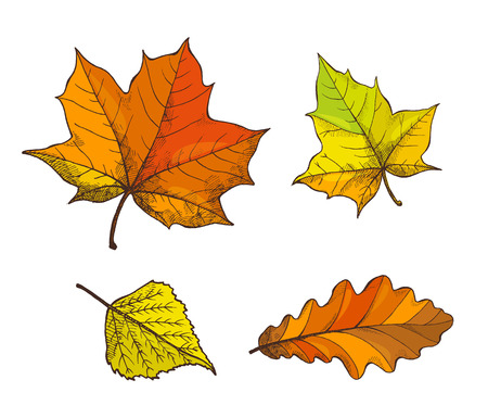 Fall fallen autumnal leaves isolated icons set vector. Maple foliage, oak leafage, autumn season symbols. Withered flora of trees, deciduous items