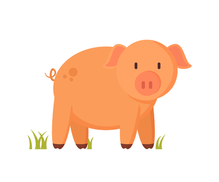 Pinkish pig or piglet standing on grass colorful vector illustration. Farm animal character in cartoon style on white background pictorial poster.