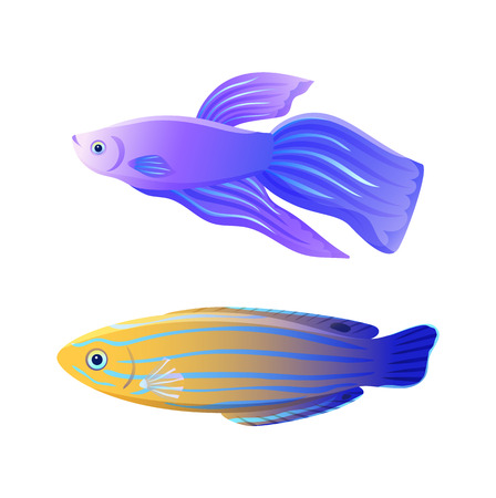 Blue striped tamarin wrasse and betta fish marine creature specie. Domestic aquarium inhabitant flat color illustration for poster or fishery journal. Çizim