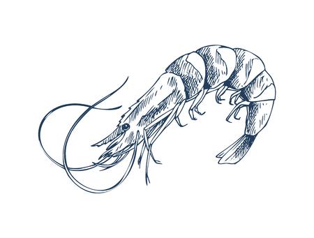 Petite représentation monochrome de crevettes de crustacés aquatiques. Icône de style de croquis de produits marins comestibles isolée sur blanc pour l'affiche promotionnelle du restaurant de fruits de mer. Vecteurs