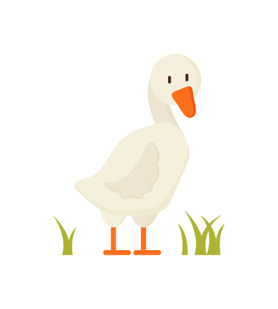 White goose standing on greenish grass cartoon character for children book illustration. Flat colorful vector farm animal depiction isolated on white.