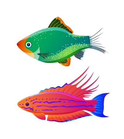 Filamented flasher wrasse and green tiger barb. Freshwater aquarium pets silhouette icon on blank background in cartoon style vector illustration