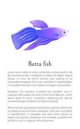 Blue betta fish, siamese fighting fish graphic icon. Freshwater aquarium agressive pet on blank background in cartoon style vector illustration. Ilustração