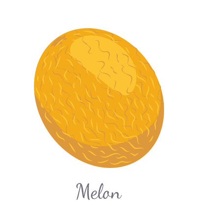 Melon Exotic Juicy Stone Fruit Vector Isolated