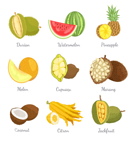 Durian and watermelon lush succulent tropical exotic fruits icons set vector. Pineapple and banana, coconut and marang slices. Delicious healthy food