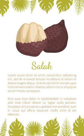 Salak Salacca zalacca palm tree exotic juicy fruit vector poster text sample and palm leaves. Tropical edible food, dieting vegetarian nutritious dessert