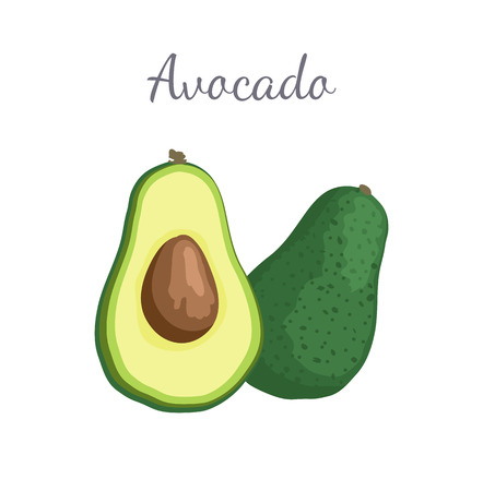 Avocado Alligator Pear Exotic Juicy Fruit Vector