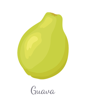 Guava Pineapple Guavas Exotic Juicy Fruit Vector