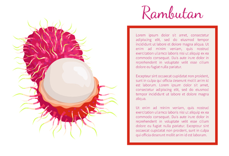 Rambutan exotic juicy stone fruit whole and cut vector poster frame for text. Dieting vegeggies edible tropical fruits lychee, longan, or mamoncillo Standard-Bild - 113704463
