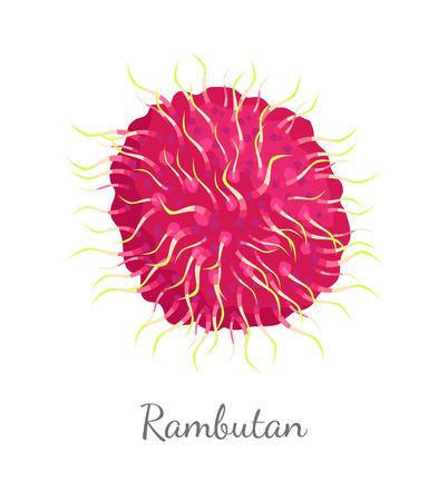 Rambutan Exotic Juicy Fruit Vector Isolated Icon Çizim
