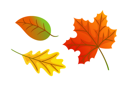 Maple Leaves Autumnal Symbols Icons Set Vector Illustration