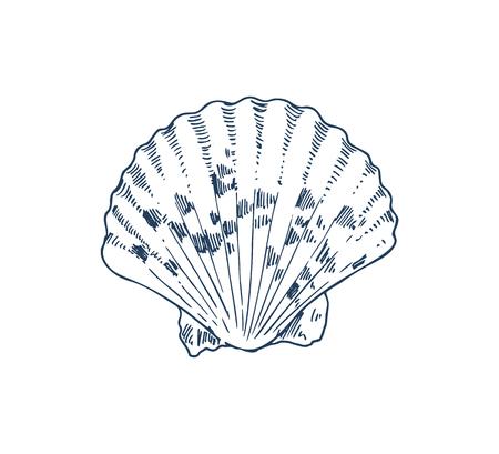 Common cockle edible saltwater clam specie, marine bivalve mollusk vector icon. Monochrome hand drawn sea creature. Nautical poster in sketch style. Illustration