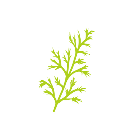 Dill species herb closeup icon. Twig of anethum graveolens branch with thin leaves used in cooking of dishes. Plant greenery herbal product vector Imagens - 114374906
