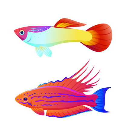 Aquarium inhabitant guppy and swordtail fish set. Colorful sea animal vector illustration for information isolated on white for nautical magazine. 向量圖像