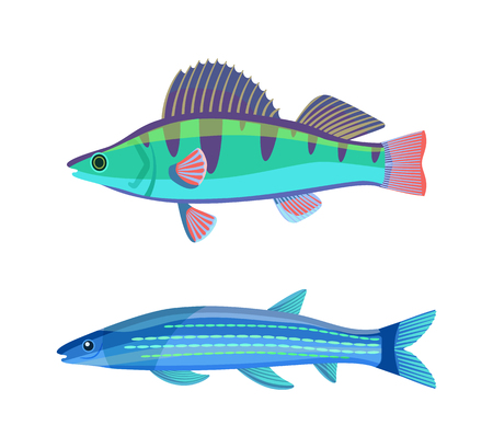 Mackerel blue fish marine set. Limbless soft-bodied cold-blooded animals living in sea waters. Colorful creatures isolated on vector illustration
