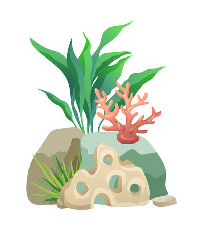 Vegetation green and coral plants with broad leaves foliage. Stone holes made by water. design of aquarium interior isolated on vector illustration