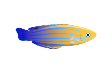 Striped yellow and blue wrasse isolated on white, vector illustration of pretty marine inhabitant, glossy body with colorful lines, underwater dweller 일러스트