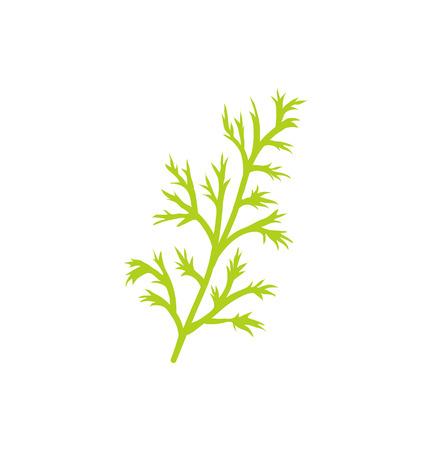 Ikona zbliżenie zioło gatunków koperku. Gałązka anethum graveolens o cienkich liściach używana do gotowania potraw. Wektor produktów ziołowych zieleni roślinnej Ilustracje wektorowe