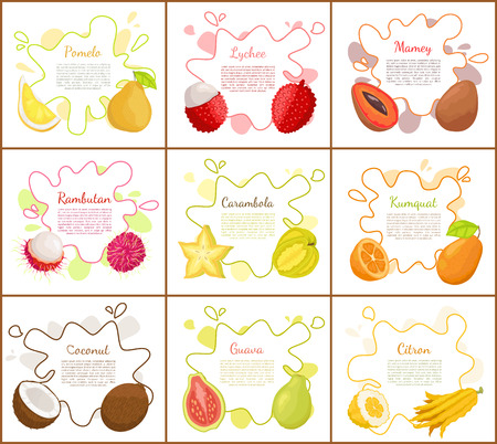 Pomelo and Lychee Mango Set Vector Illustration