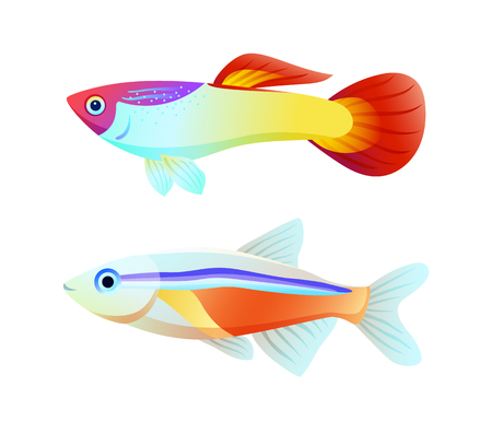 Neon Tetra and Guppy Fish Color Informative Poster