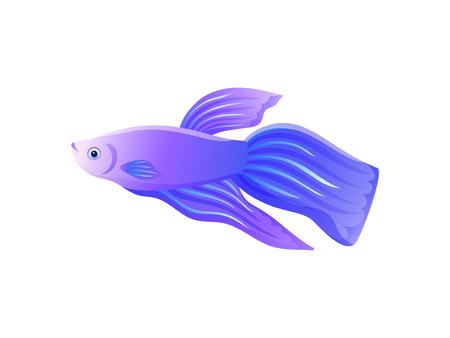 Bright lilac betta fish with big flipper banner isolated on white backdrop, vector illustration of small saltwater inhabitant, pretty underwater liver