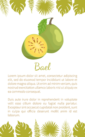Bael exotic juicy fruit vector poster text sample and leaves. Aegle marmelos, Bengal quince, golden stone wood apple, bitter orange. Tropical edible food Illustration