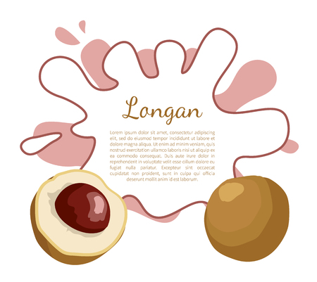 Longan exotic juicy fruit from plant related to litchi vector poster with frame and place for text.Tropical food, dieting vegetarian grocery banner Ilustrace