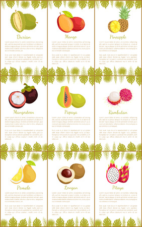 Durian and Mango Pineapple Posters Set Vector
