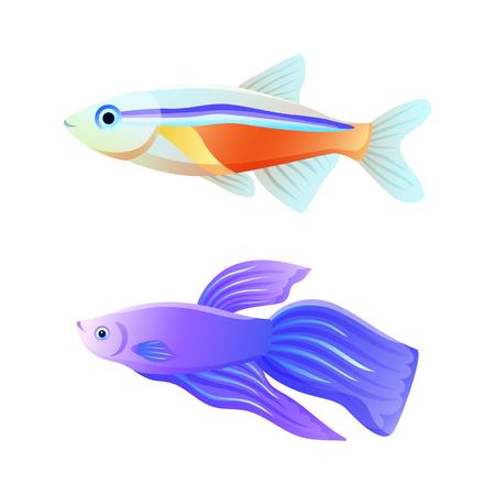 Colorful Sea Inhabitant Neon Tetra and Betta Fish