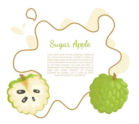 Suikerappel, sweetsop of custardappel, Annona squamosa, exotisch sappig fruit vector posterframe en tekst. Tropisch eetbaar voedsel, vegetarische dieetbanner
