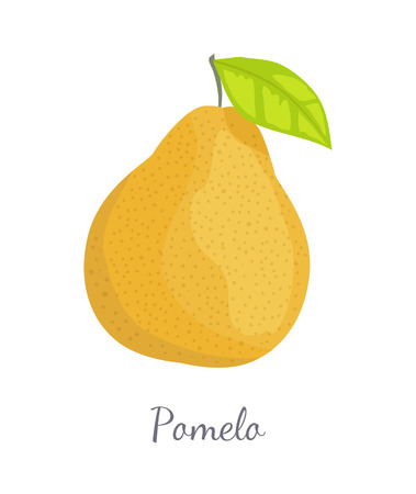 Pomelo exotic fruit vector illustration isolated. Tropical food, similar in appearance to grapefruit or pear, dieting vegetarian citrus with leaf