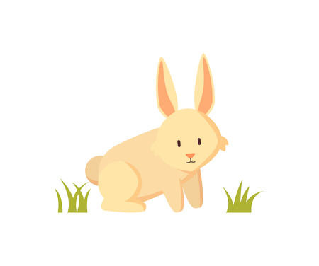 White rabbit small furry creature as farm animal or pet depiction isolated on white. Cartoon illustration for children book or agriculture magazine. 向量圖像