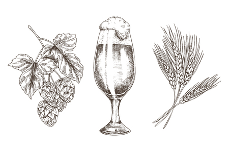 Ale in goblet and raw for tasty beer reproduction isolated on white background vector illustration of hop and wheat stack foamy alcohol drink in glass Stock Illustratie
