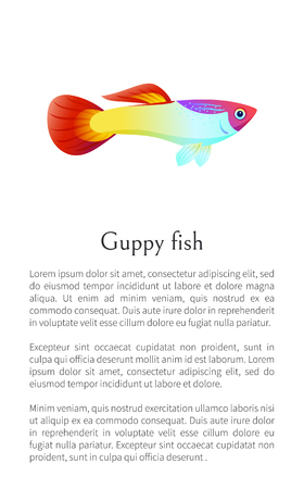 Aquarium Guppy fish poster with text sample. Marine creature color cartoon flat vector illustration with information about aquatic world character