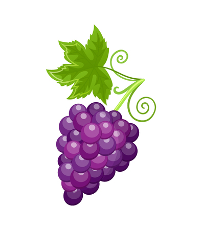 Fresh Food Ripe Grapes of Autumn Season Vector