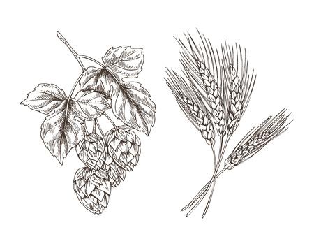 Weizen- und Hopfenbündel isoliert auf weißem Hintergrund