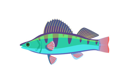 Colorful fish type closeup icon. Tropical limbless animal living in water of sea. Organism with dorsal fin and gills, isolated on vector illustration