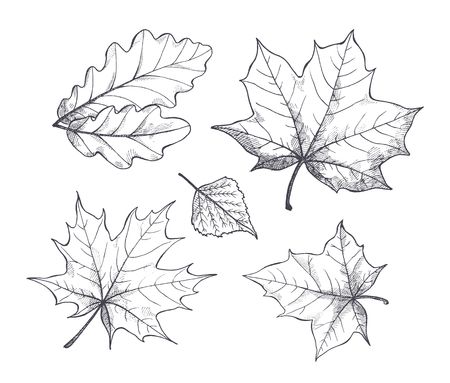 Fall autumn season leaves, monochrome sketches outline isolated icons set vector. Foliage of different kinds of trees. Colorless seasonal dry flora