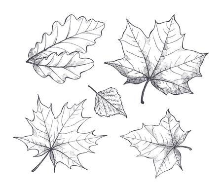 Otoño hojas de la temporada de otoño, bocetos monocromos delinean iconos aislados conjunto de vectores. Follaje de diferentes tipos de árboles. Flora seca estacional incolora