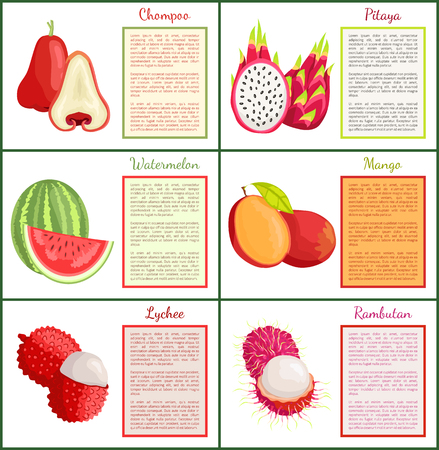 Chompoo and Pitaya Watermelon Posters Set Vector