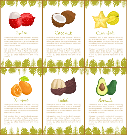 Lychee and coconut carambola posters set with text sample vector. Salak and avocado, star slice and kumquat, decoration monstera foliage leaves