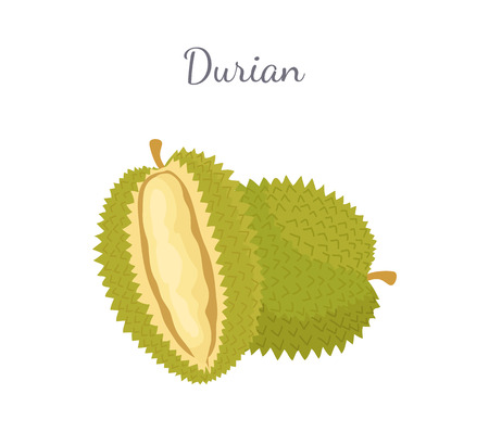 Durian exotic juicy fruit whole and cut with unusual flavour and odour vector isolated. Tropical edible food, dieting vegetarian icon full of vitamins