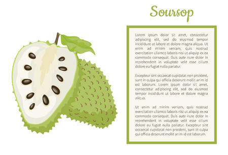 Soursop whole and cut fruit in frame for text vector poster isolated. Annona montana edible medicinal plant in Annonaceae family, exotic tropical food Illustration